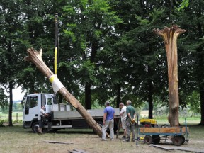 install of trees