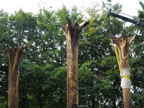 install of trees 3