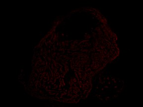 ImageJ=1.47vunit=micronmin=1.0max=74.0